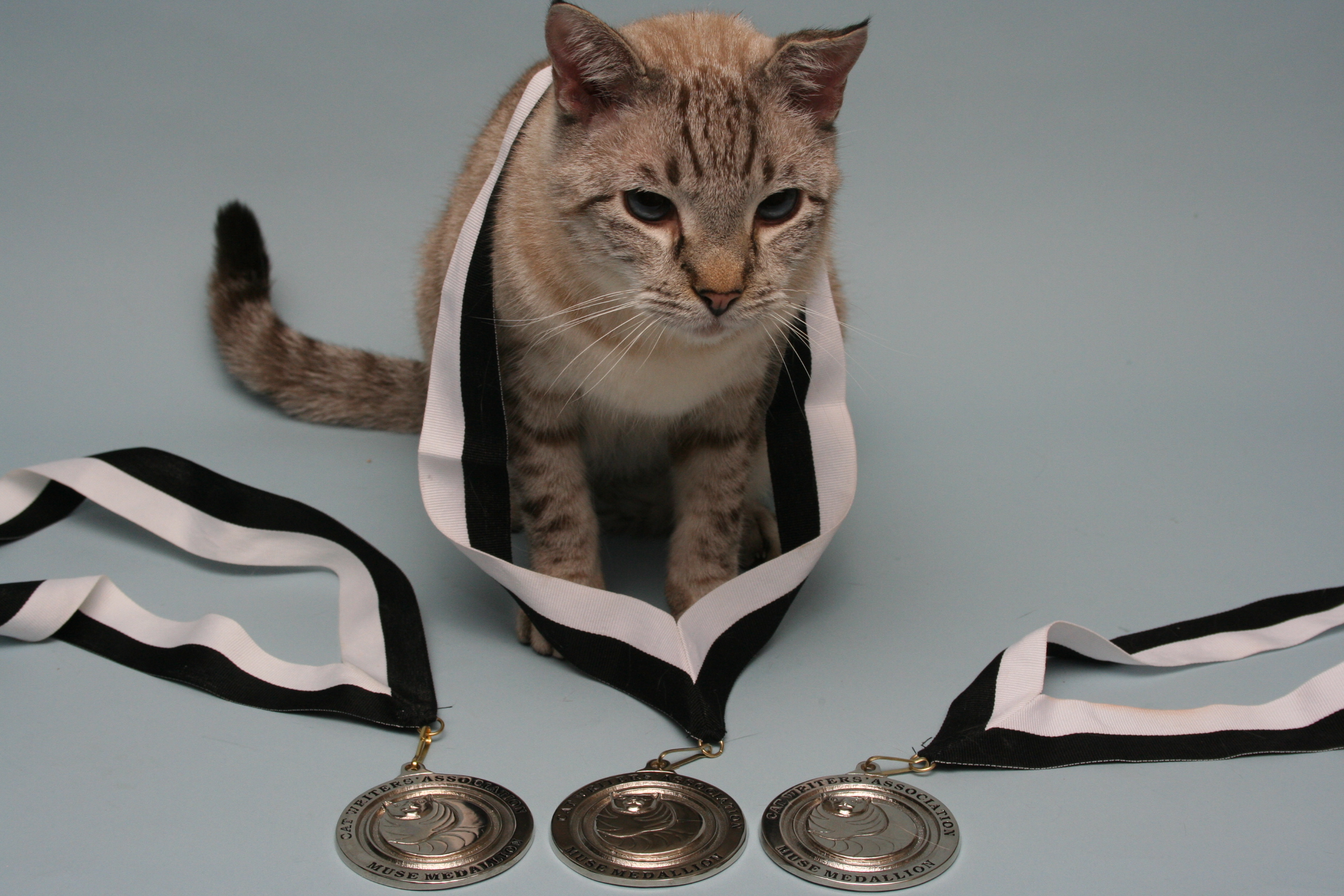 _Muse Medallions Collars 091