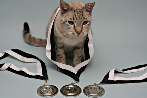 CWA Muse-Medallions