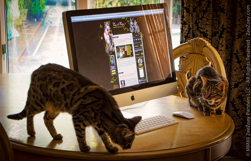 cats-and-computer