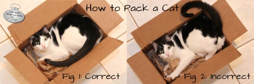 How to pack a cat