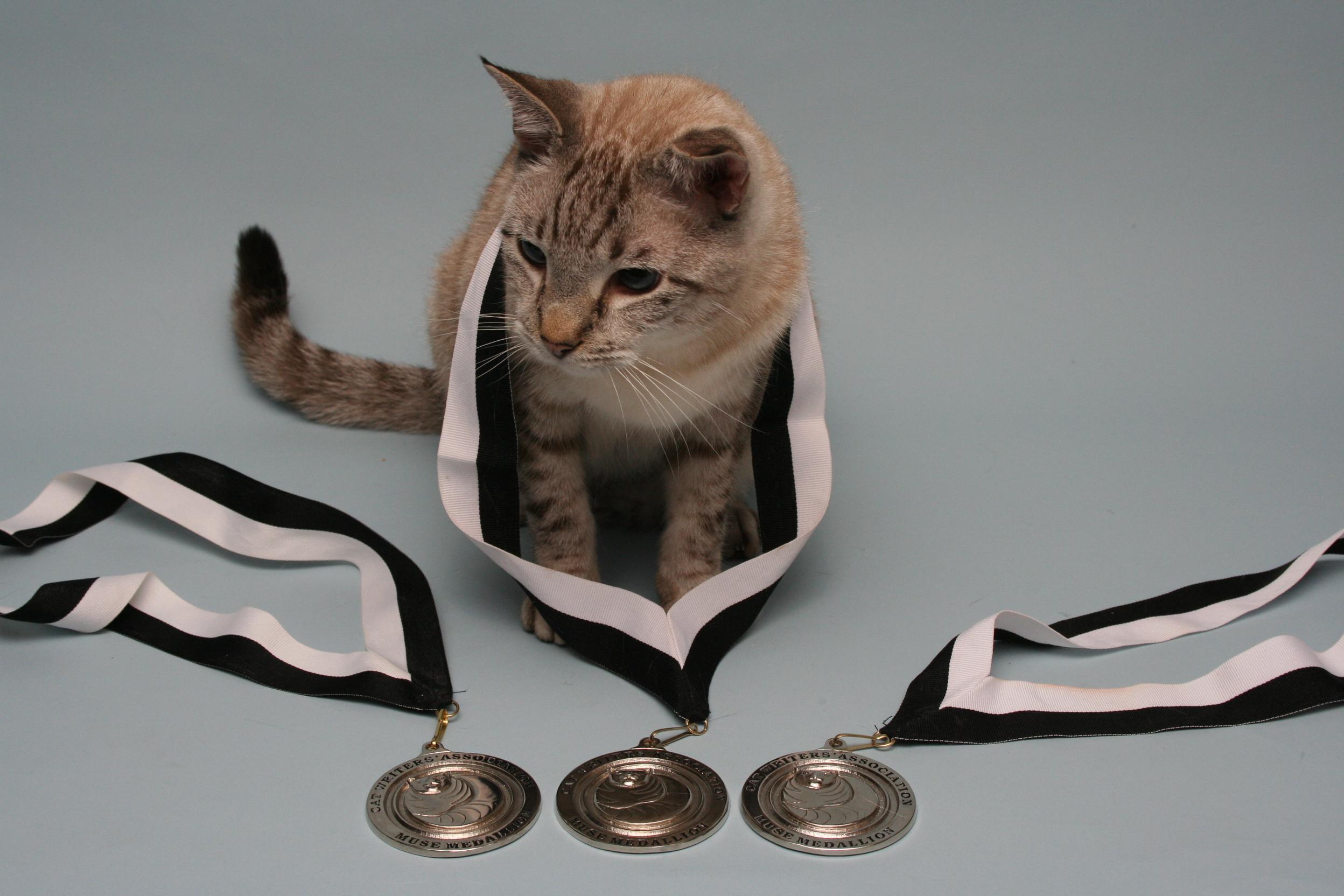_Muse Medallions Collars 092