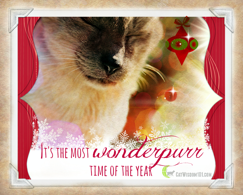 Wonderpurr holiday wishes