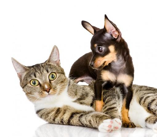 Depositphotos_18034341_CatDog