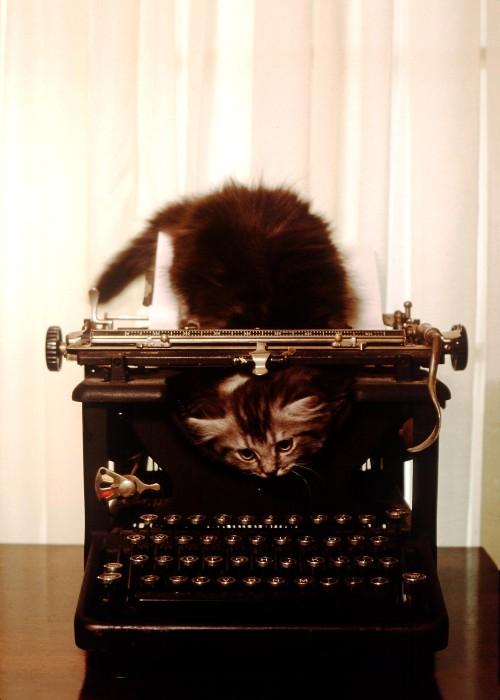 KittenTypewriter