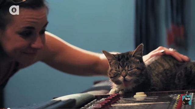 Alana Grelyak -Lil Bub
