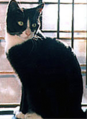 Ketzel cat