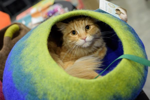 Hauspanther Cat Lounge, courtesy Carl Kerridge photography and BlogPaws